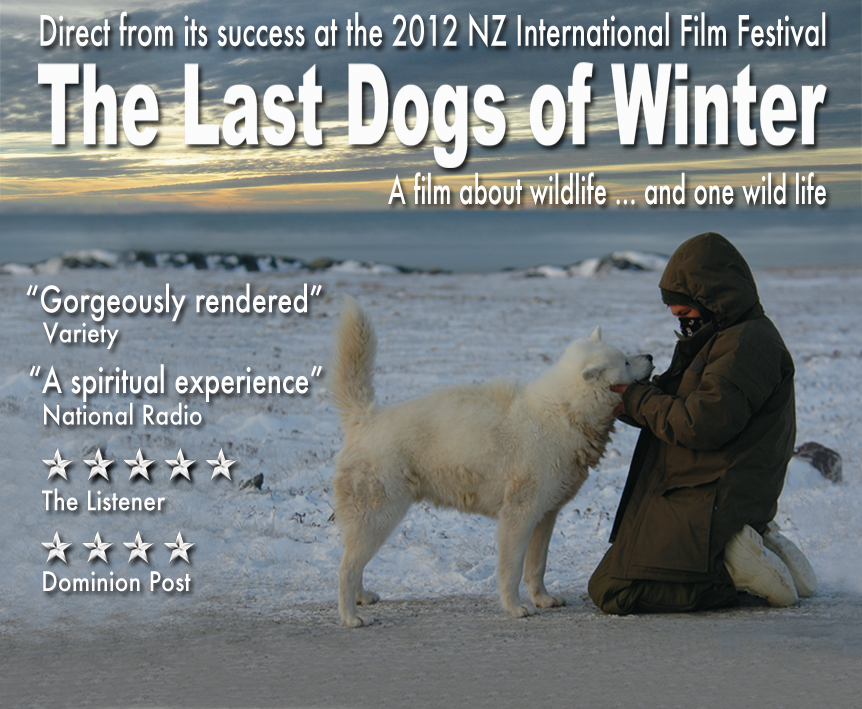 Last Dogs Of Winter Canadian Inuit Dogs